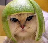 Нажмите на изображение для увеличения Название: cat_4474744.jpg Просмотров: 140 Размер:21.6 Кб ID:2100
