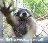 Нажмите на изображение для увеличения Название: cyki_enot.jpg Просмотров: 154 Размер:47.4 Кб ID:2101