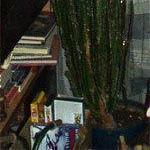 Нажмите на изображение для увеличения Название: kaktus.jpg Просмотров: 106 Размер:30.9 Кб ID:3225