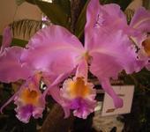 Нажмите на изображение для увеличения Название: 016_Orchidee_1.jpg Просмотров: 175 Размер:38.5 Кб ID:44983