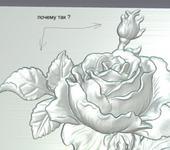Нажмите на изображение для увеличения Название: роза.jpg Просмотров: 3332 Размер:63.9 Кб ID:221667