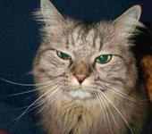 Нажмите на изображение для увеличения Название: CAT.jpg Просмотров: 10 Размер:60.1 Кб ID:250669