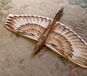 Нажмите на изображение для увеличения Название: alula_bird.jpg Просмотров: 108 Размер:97.4 Кб ID:265705