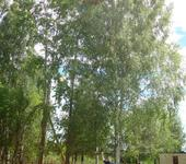 Нажмите на изображение для увеличения Название: Дерево.JPG Просмотров: 50 Размер:151.9 Кб ID:355049