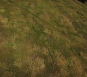 Нажмите на изображение для увеличения Название: поляна.jpg Просмотров: 60 Размер:107.2 Кб ID:366377