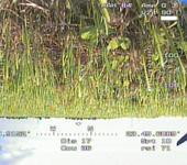 Нажмите на изображение для увеличения Название: 2.JPG Просмотров: 49 Размер:100.0 Кб ID:509272