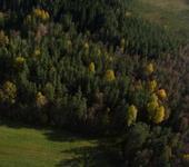 Нажмите на изображение для увеличения Название: лес.jpg Просмотров: 78 Размер:65.4 Кб ID:561338