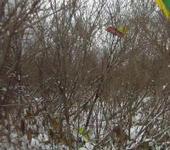 Нажмите на изображение для увеличения Название: vlcsnap-2011-11-26-15h11m54s238.jpg Просмотров: 26 Размер:91.8 Кб ID:572749