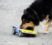 Нажмите на изображение для увеличения Название: авто собака.jpg Просмотров: 115 Размер:40.9 Кб ID:656325