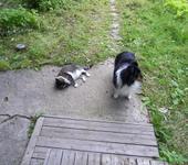 Нажмите на изображение для увеличения Название: cats2.jpg Просмотров: 14 Размер:128.0 Кб ID:820336