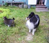 Нажмите на изображение для увеличения Название: cats1.jpg Просмотров: 13 Размер:107.0 Кб ID:820337